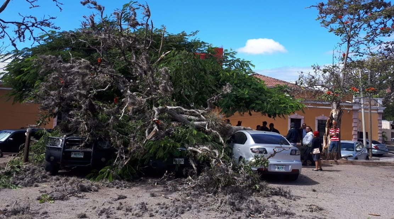 Fuertes vientos provocaron que rama de un árbol cayera sobre un vehículo