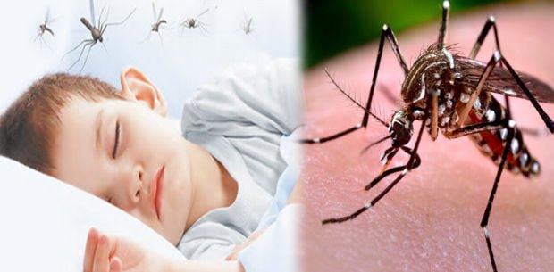 Salud: De 178 muertes confirmadas por dengue el 66 % son menores de 15 años