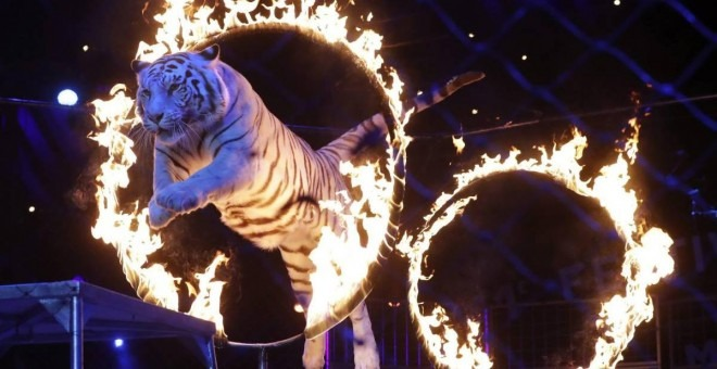 Madrid: Circos deberán cancelar uso de animales salvajes a partir de abril