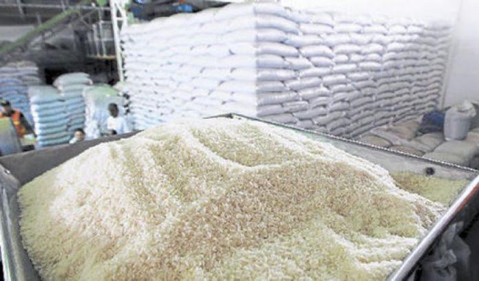 Producción de Arroz de arroz dependerá de lluvias y financiamiento