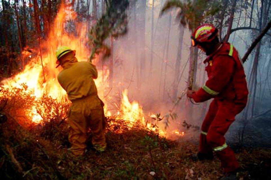 ICF: 454 incendios forestales consumen 18,695 hectáreas