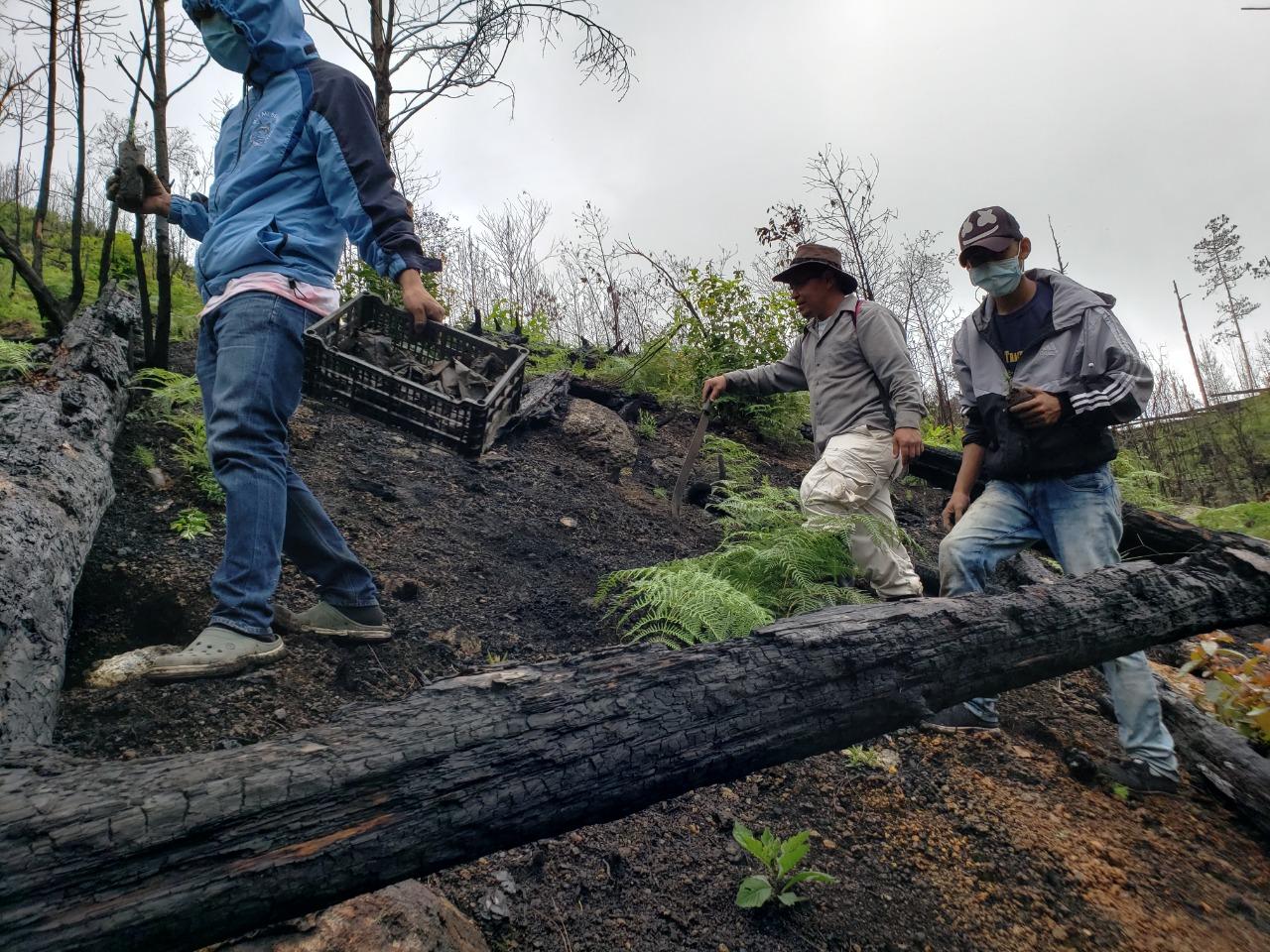 En medio de pandemia  llevan a cabo 20 Jornadas de Reforestación en el Parque Nacional La Tigra