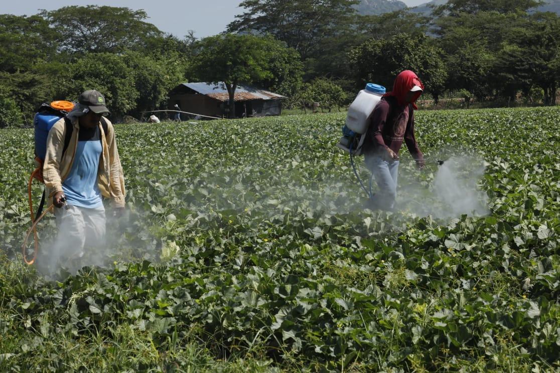 Proyecto ejecutado a través de Invest-H: Aumenta producción de frutas, maíz y frijol en Namasigüe con Alianza para el Corredor Seco