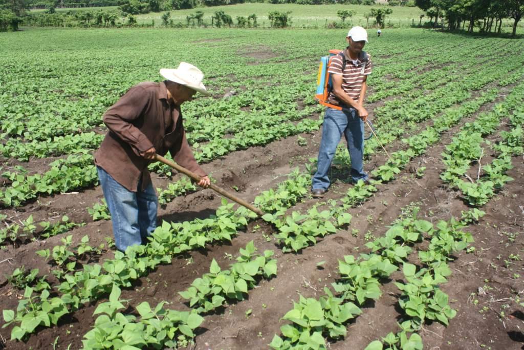 Garantizan seguridad alimentaria de Honduras con 17 millones de quintales de granos
