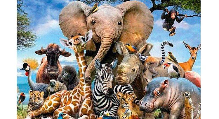 Día mundial de los animales; conoce cuantos están en peligro de extinción