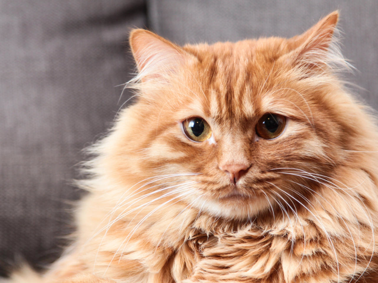 Con parpadearle a los gatos puedes ganarte su confianza