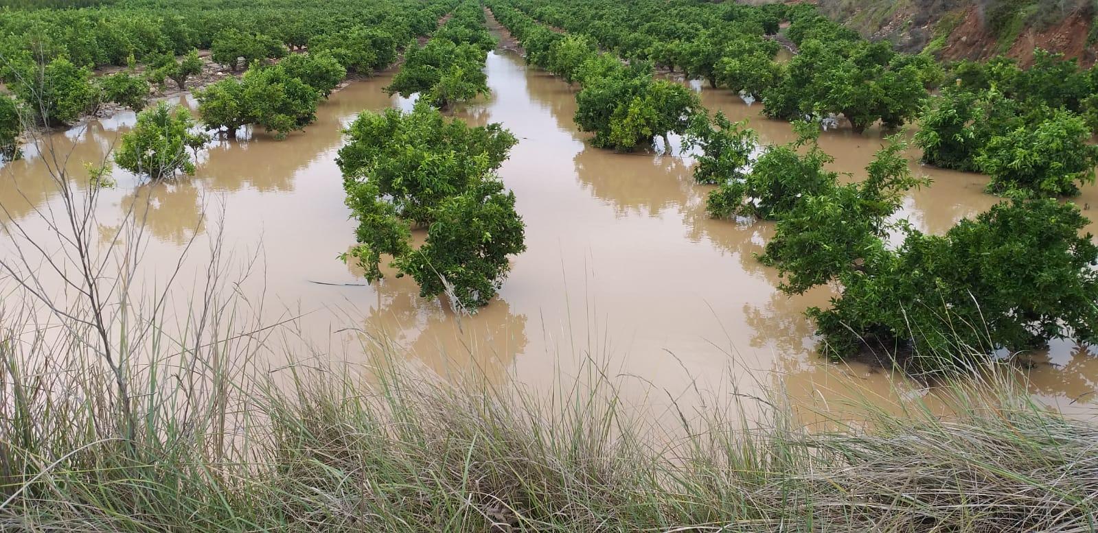 A un 80 por ciento ascienden pérdidas por inundaciones en el sector agrícola