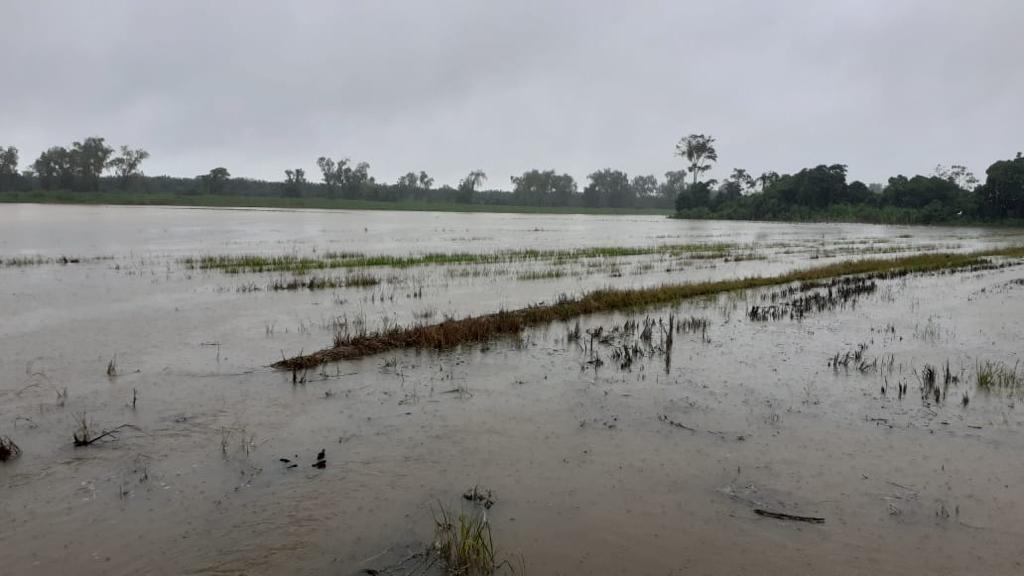4,200 manzanas de arroz están afectadas por la depresión tropical Eta