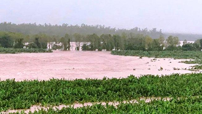 Cortés, Atlántida y Colón son los departamentos más afectados en el sector agrícola por Eta