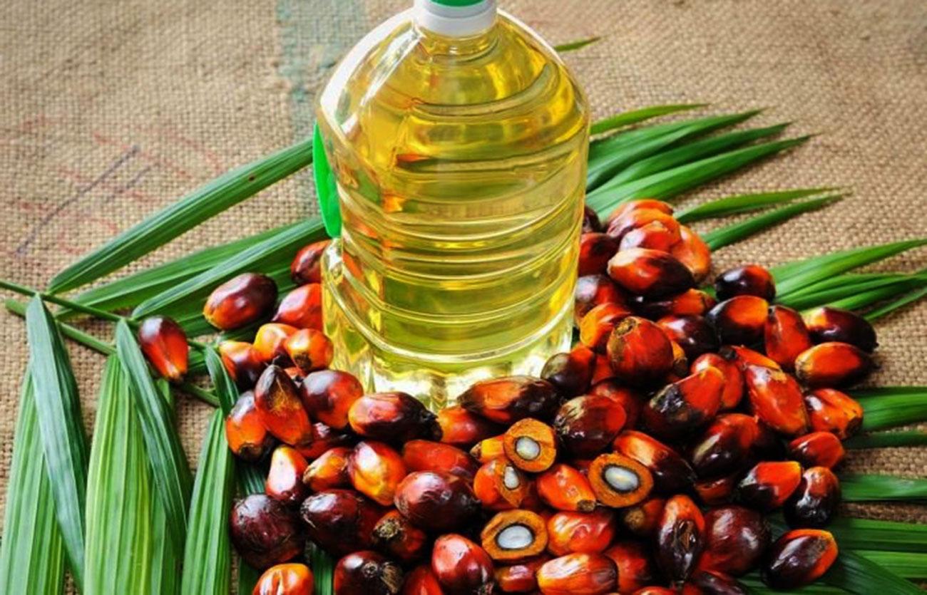 Productores de aceite de palma afirman que en diciembre volverán a exportar ese producto