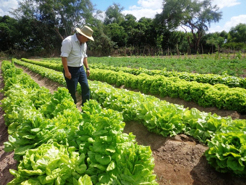 Ministro de la SAG: «El agro hace y hará grande a Honduras»