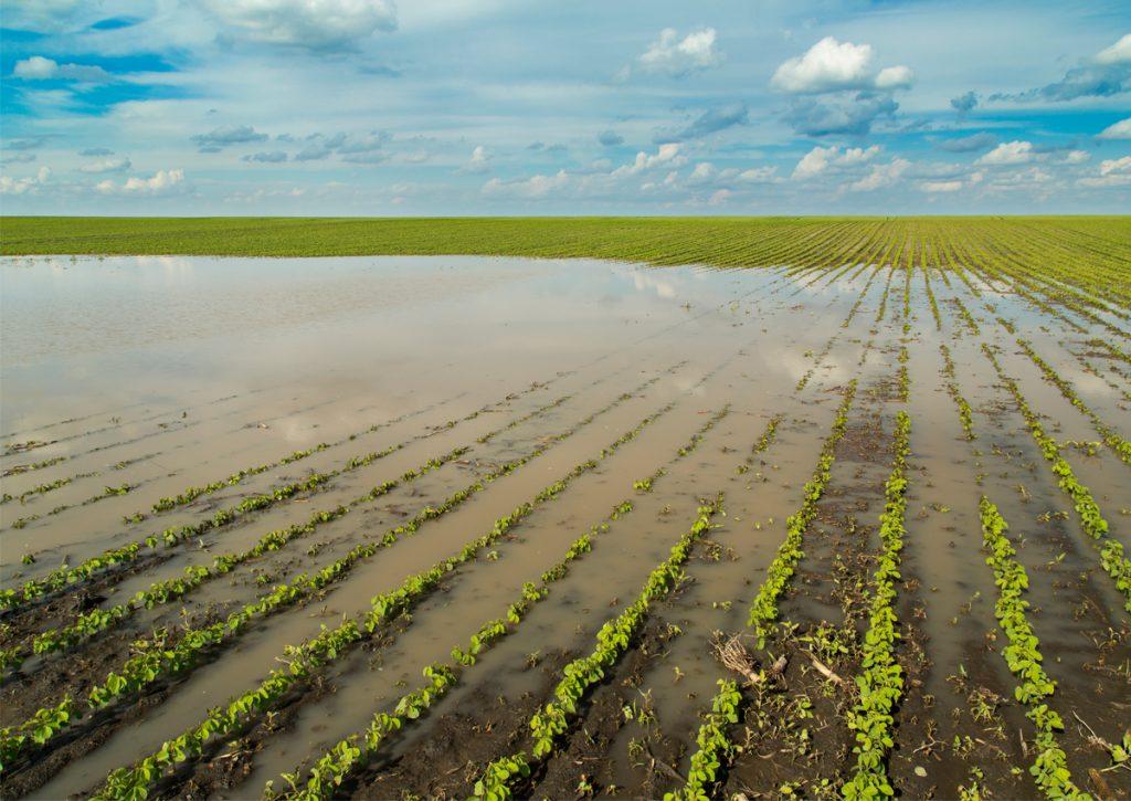 Ministro de la SAG: 20 tipos de cultivos resultaron afectados por Eta