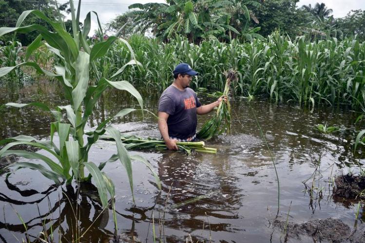 Ministro de la SAG: «Todo el sector agroalimentario fue afectado por Eta»