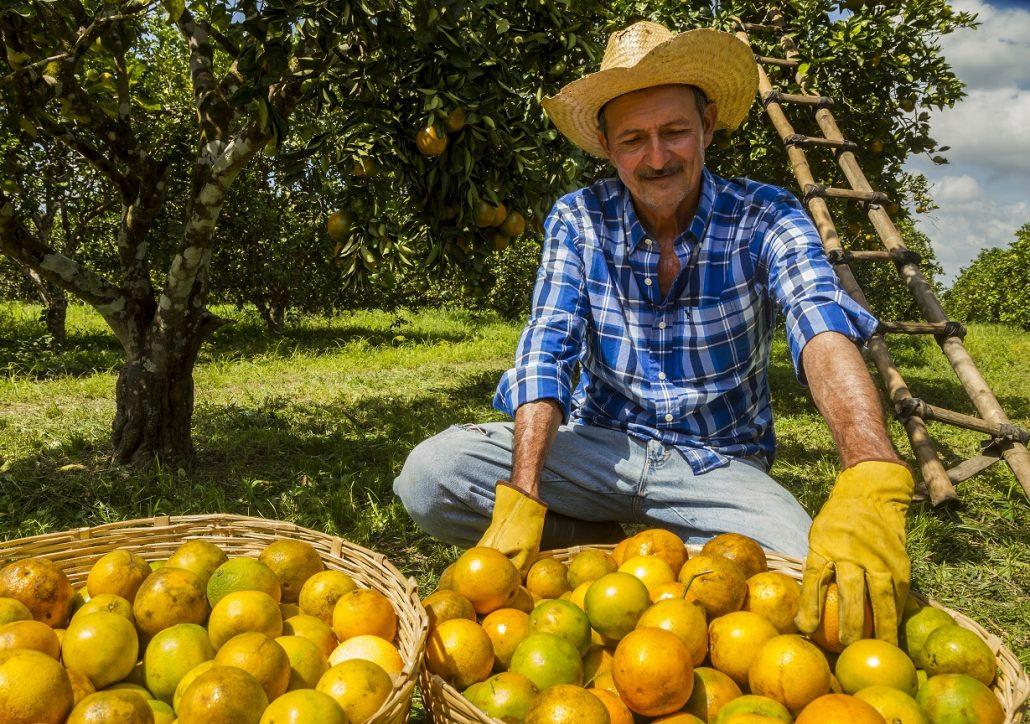 Citricultura golpeada por Eta se reportan 15 mil toneladas de naranja en pérdidas en El Bajo Aguan