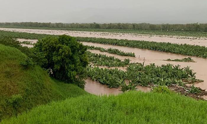 Millonarias pérdidas en cultivos de palma africana y banano deja Iota en el país