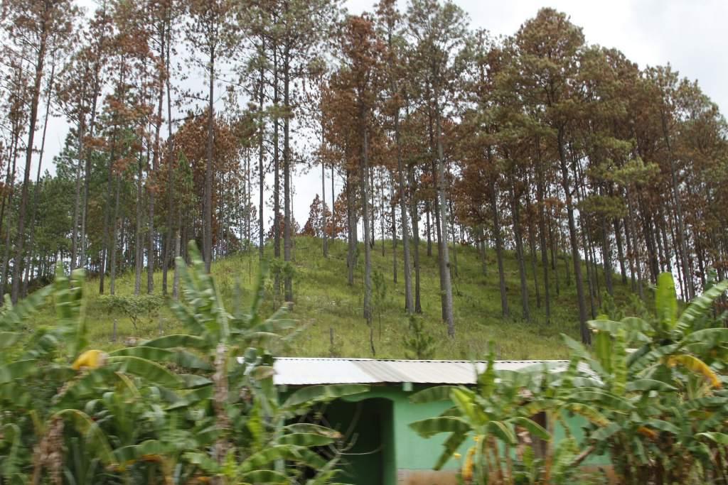 Unos L 230 millones se destinarán en el país para la protección del bosque