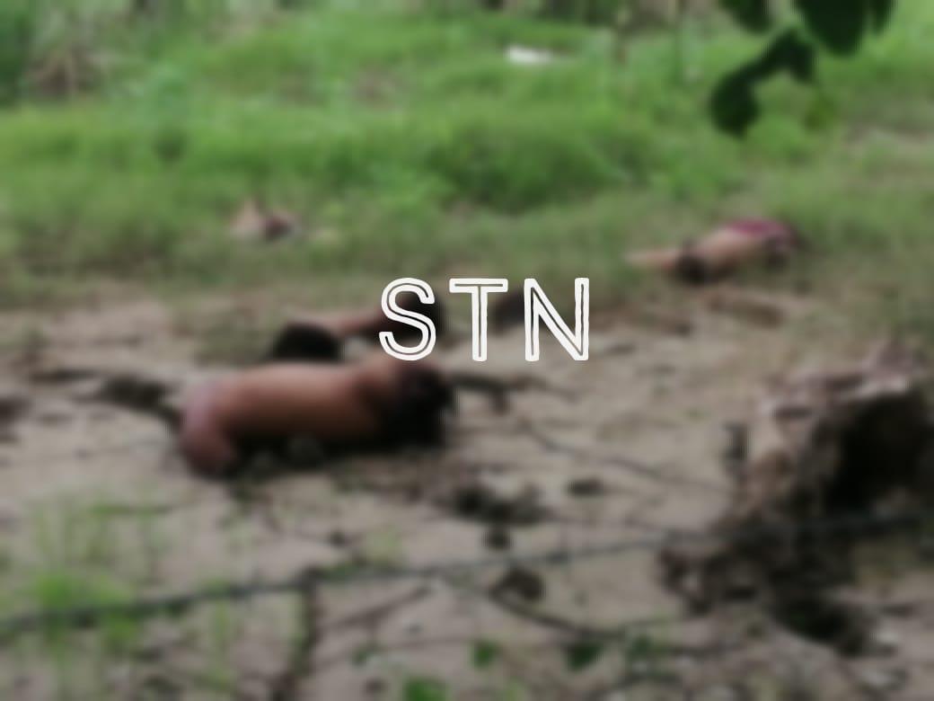 Desmembrados encuentran dos cuerpos en cañeras de Chotepe, SPS