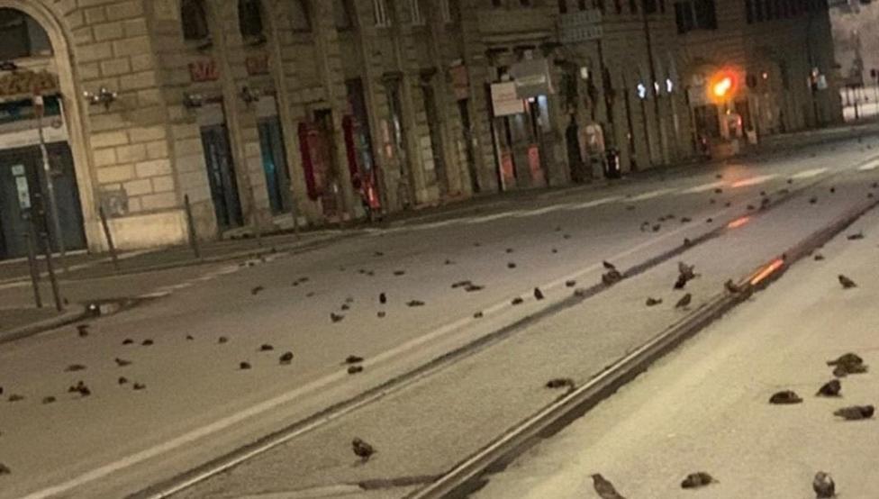 Cientos de pájaros aparecen muertos en las calles de Roma tras los fuegos artificiales de Año Nuevo