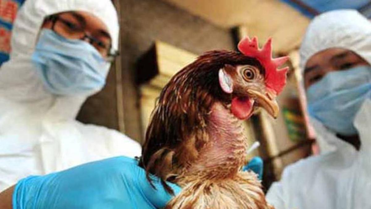 Rusia: se detectan los primeros casos de gripe aviar H5N8 en humanos