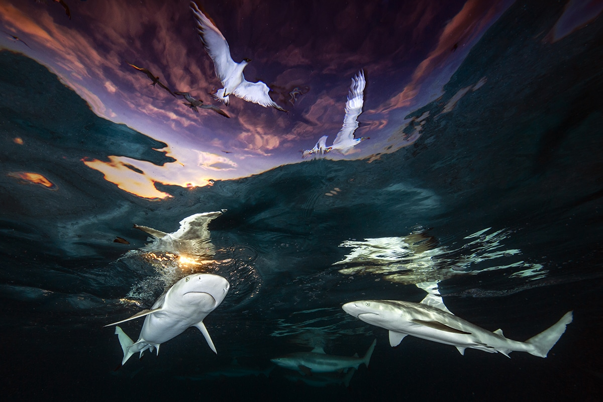 Conoce la fotografía ganadora del concurso: Underwater Photographer of the year 2021