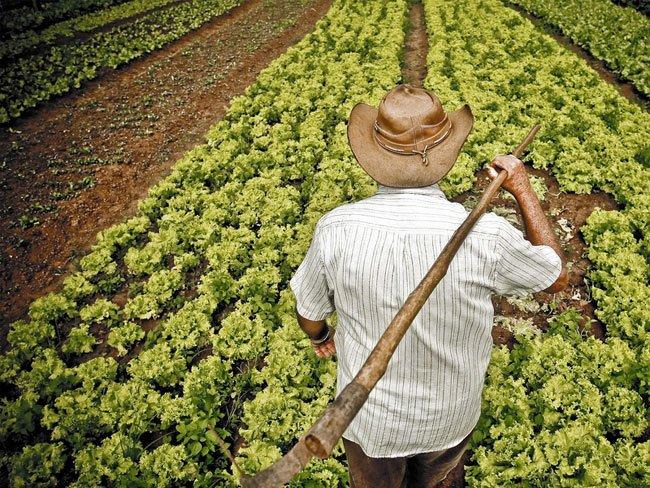 Julio Raudales: La inversión en infraestructura y el agro es importante para la recuperación económica