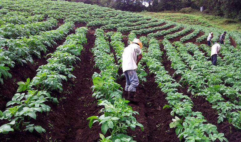 Ebin Andrade: 98,000 productores podrán acceder a los fondos AgroCredito al 5% de interés