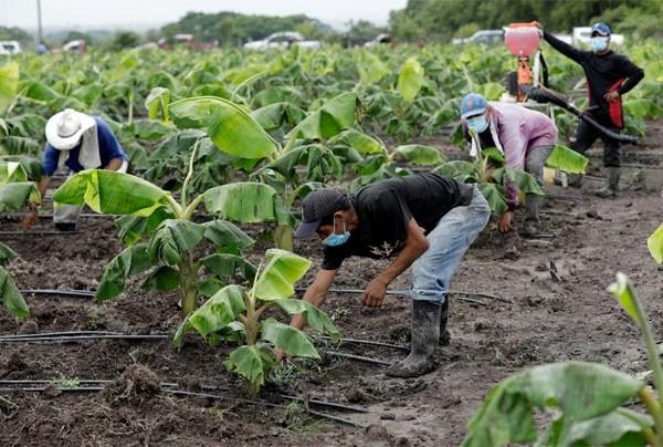 Experto en agro irrigación: Tasa de 5% para financiar a agricultores es excelente