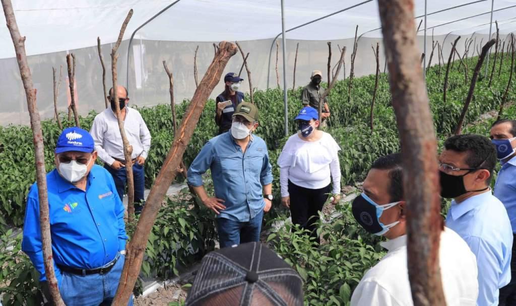 Gobierno pagará el 3.7% para que productores accedan al AgroCrédito