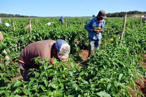 Experto en agricultura: El productor debe buscar apoyo para que el sector agroalimentario salga del bache