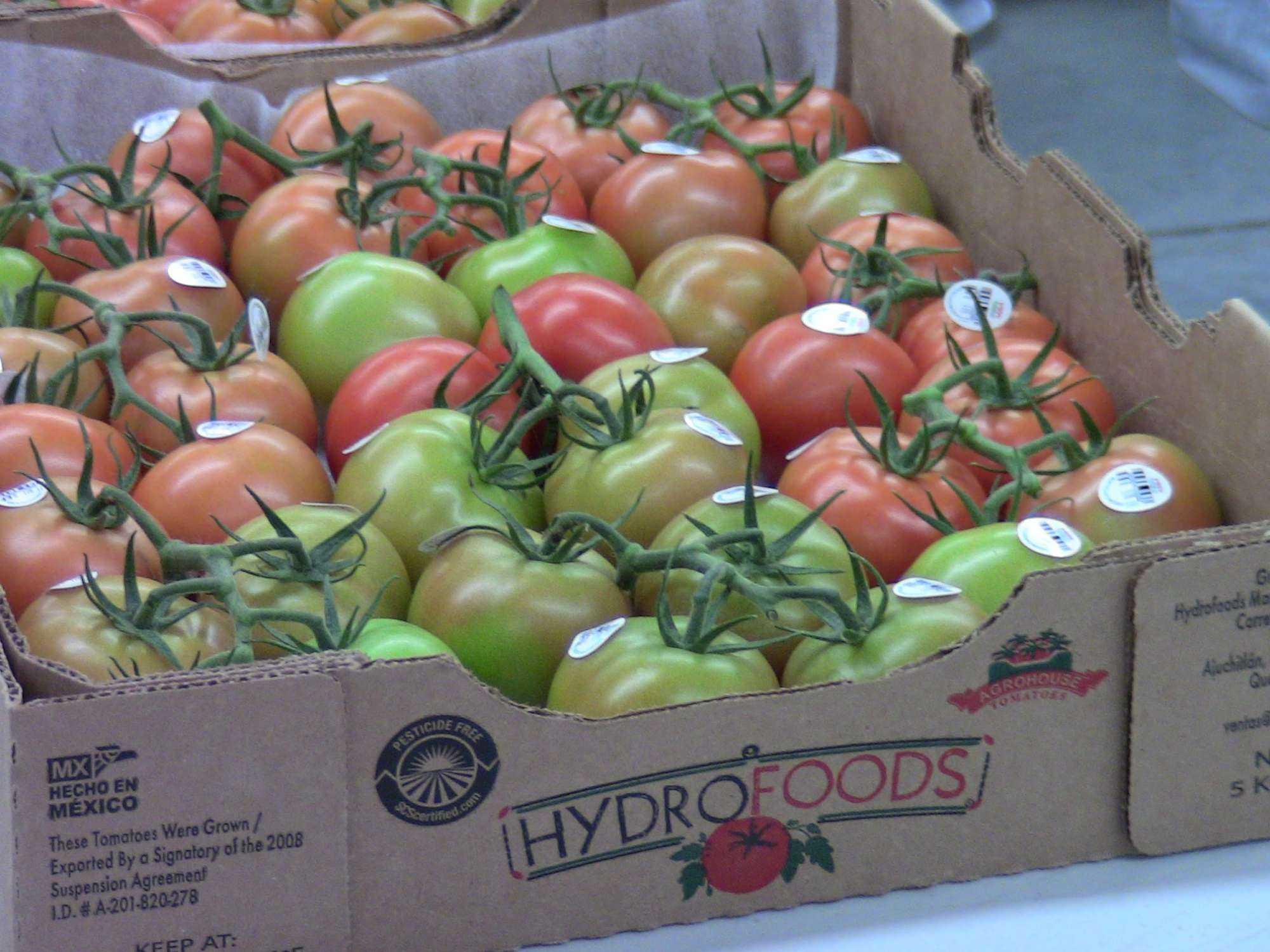 Por primera vez Honduras exporta un contenedor de tomate verde a EEUU