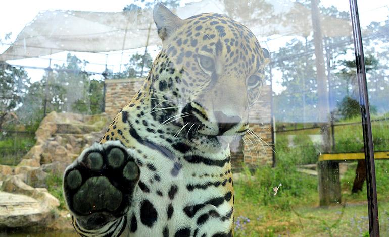 """El Zoológico """"Rosy Walther"""" reabrió sus puertas al público y te espera en esta Semana Santa"""