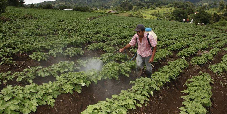 Nancy Lara:  Unos L.60 millones debe invertir el Estado para potenciar la agroindustria