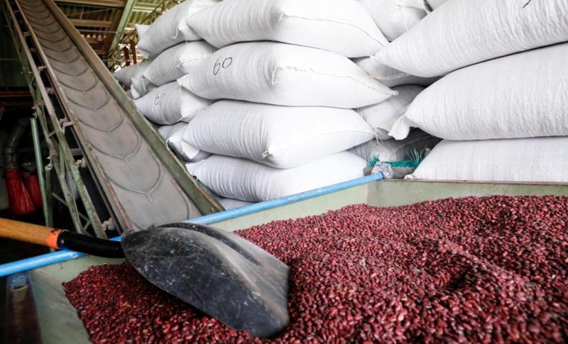 Mario Gómez:  «IHMA tiene una reserva de 162 mil quintales de granos»