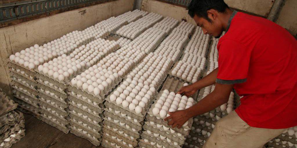 Precio del huevo se mantuvo estable por lo que no se justifican incrementos: Adecabah
