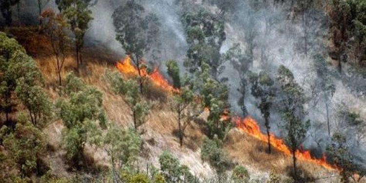 Viceministro del ICF: 86% bajan áreas forestales afectadas por incendios