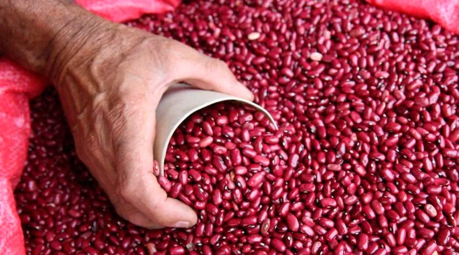 Gerente del IHMA: 77 mil quintales de frijol hay en reserva